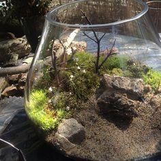 Terrarium with utricularia, via Flickr.
