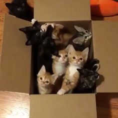 From Box of kittens. The greatest gift ofCrazy Cat Lady Starter Pack had arrived. ~ oh mah word so cute! Such an awesome cat community for all the cat lovers.Happy week From Cute Cats And Kittens, I Love Cats, Crazy Cats, Kittens Cutest, Beautiful Cats, Animals Beautiful, Cute Funny Animals, Funny Cats, Animals And Pets
