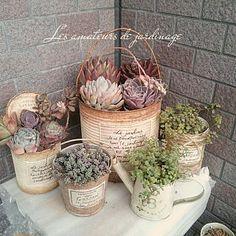 Succulent Gifts, Succulent Gardening, Succulent Terrarium, Planting Succulents, Container Gardening, Vasos Vintage, Tin Can Art, Tin Can Crafts, Garden Junk