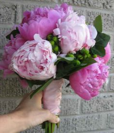 light and dark pink peonies