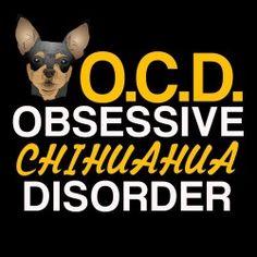 Chihuahua                                                       …