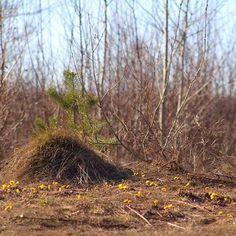 Наша уральская весна. #природа #гуляем