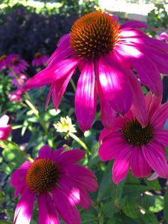Creative Landscape, Landscape Design, Landscaping Company, Front Yards, Roots, Backyard, Happy, Flowers, Plants