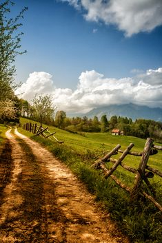 My life in the woods  allthingseurope: Belluno, Italy (by winterriot)  (via midwestwasp)