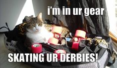 Dexter is always into my derby gear. Might be the smell or just because he's a curious kitty.