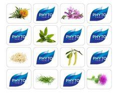 καλέντουλα, φασκομηλιά, άρκειο, ιτιά, σόγια,δεντρολίβανο,αλθαία επιλεγμένα για τις εξαίρετες ενυδατικές και αναδομητικές τους ιδιότητες. Phyto Paris, Dry Hair, Plant