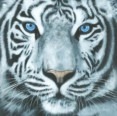 ARTFINDER: White Tiger by Nicola Colbran - Oil on Canvas portrait of a white Tiger with blue eyes.