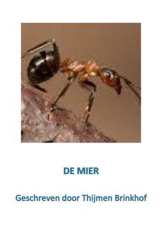 Werkstuk  | 'DE MIER'  | Geschreven door Thijmen Brinkhof  | www.apboek.nl