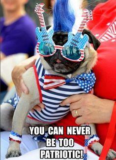 Funny Pug Dog Meme Pun LOL Silly Dogs, Funny Dogs, Dog Dresses, Nice Dresses, Dog Memes, Funny Memes, Memes Humor, Pug Mug, Pugs And Kisses