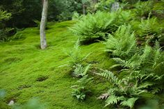Moss living up the humidity of Kyoto by ippei + janine, via Flickr