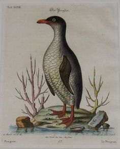 Penguin, 1749