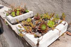 The Wild Project Green Roof- Alive Structures Papercrete Planters by Inhabitat, via Flickr