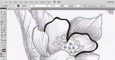stroke and fill illustrator tutorial
