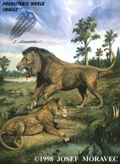 American Lion. Extinct about 11,000 years ago. Species survived for around 330,000 years.