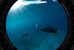 The #Catlin #Seaview Survey - www.catlinseaviewsurvey.com/