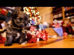 Just when you thought cats had a patent on holiday cuteness, puppy power rears its adorable head.