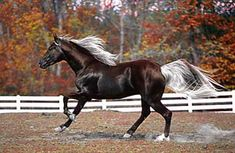Most Beautiful Horse in the World | the most beautiful horses