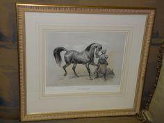 Arabian Horse; Larache (Etalon du Maroc) A Paris chez les editeurs, quai aux Fleurs. 1g. Imprime Par Godard. Signed V. Ajam.  Tesssari et Cie Quai des Grands Augustins 55, Hand Colored Etching