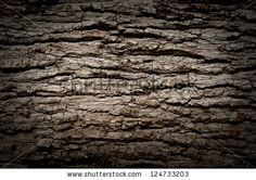 https://thumb1.shutterstock.com/display_pic_with_logo/578260/124733203/stock-photo-bark-texture-background-pattern-crack-old-brown-for-design-124733203.jpg