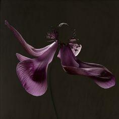 Carsten Witte (The Secret Life of Plants)