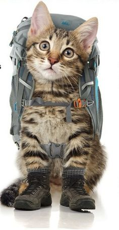REI Has Created Backpacking Gear for Kittens?! Is This for Real?