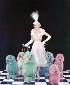 """Doris Day appears on the cover of Collier's 1952 magazine to promote her new film, """"April in Paris."""" With her are 6 dyed poodles."""