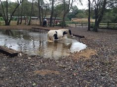Been a busy year here. Changed our name from Spirit of the Natural Horse to Horse Haven Uk. Turned scrub land into another leisure area for the horses with varying surfaces and included a watering hole which they all love. Video coming soon. Work has commenced on phase 3 of our track system.