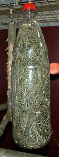 DIY hay feeder: Drill or cut a big 'feeding' hole in the bottom and a hanging hole in the lid then fill it with hay or paper shred plus seeds and treats throughout! Rabbit Cages, Bunny Cages, Rabbit Toys, Pet Rabbit, Rabbit Burrow, Guinea Pig Care, Guinea Pigs, Diy Guinea Pig Toys, Diy Bunny Toys