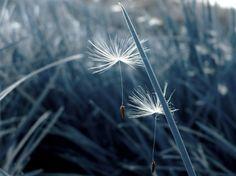 Photo Blue... by ao-ma-me  on 500px