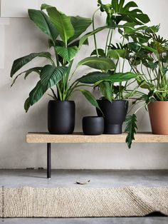 Houseplants may also add moisture to dry air due to heat and ac. Indoor plants aren't only beneficial for your wellbeing but they have psychological advantages too. Green Plants, Potted Plants, Indoor Plants, Plants On Balcony, Greenhouse Plants, Indoor Gardening, Tropical Plants, Cactus Plants, Interior Plants
