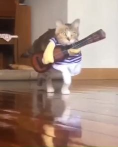The guitarist of the band🤣🤣 - Funny gifs - Gatos Funny Animal Memes, Cute Funny Animals, Funny Animal Pictures, Cute Baby Animals, Funny Cute, Funny Dogs, Animals And Pets, Cute Cats, Funny Videos Of Cats
