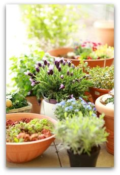 Best Tips for Growing Herb Container Gardens Indoors or Outdoors Designing and planting an herb