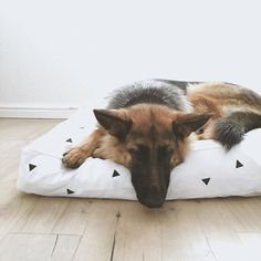 Taking photos of some new products. Sadie (our German Shepherd) happily volunteered to model for me. I also think she approves of her new bed.