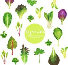 다양한 쌈 채소