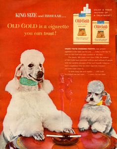 Vintage advertisement Old Gold cigarettes (apparently poodles like to smoke) Pub Vintage, Photo Vintage, Funny Vintage, Vintage Ephemera, Vintage Stuff, Vintage China, Vintage Cigarette Ads, Old Advertisements, Retro Ads