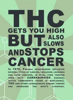 THC & CBD Fight Cancer  Join the Movement with a payment plan here: http://cbdpl.us #CBD #Kway #hempVap
