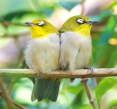 Beautiful Birds Photos By John Soong list