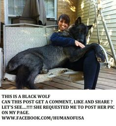 These Dogs are Huge. No, Really, You Have to See These Dogs. Huge Dogs, Giant Dogs, I Love Dogs, Animals And Pets, Funny Animals, Cute Animals, Animal Jokes, Wild Animals, Lap Dogs