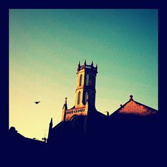 Bird. Church. Photography.