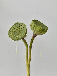 work by ©jockeono Plant Leaves, Plants, Plant, Planting, Planets