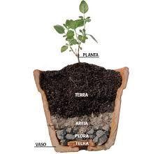como plantar suculentas - Buscar con Google