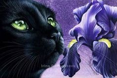 Black cat Iris by Irina Garmashova-Cawton