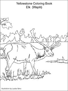 National Parks Coloring Book Fresh Yellowstone Coloring Pages Yellowstone Kids Activity Book Zoo Animal Coloring Pages, Dance Coloring Pages, Skull Coloring Pages, Butterfly Coloring Page, Mandala Coloring Pages, Coloring Book Pages, Coloring For Kids, Adult Coloring, Coloring Sheets