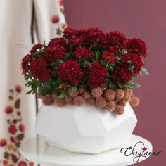 Deep red chrysanthemum Chrysanne® Chrysanthemum, Strawberry, Fruit, Awesome, Creative, Flowers, Plants, Gifts, Inspiration