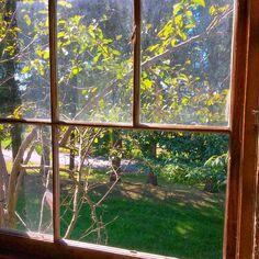 A view out a barn window frames up a cherry tree putting on a pretty fall-show.  #farmwedding #fallwedding #barnwedding #historicvenue