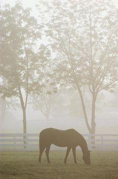 Kentucky Horse Park in Lexington, Kentucky