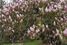 Marsala - Spring Impressions