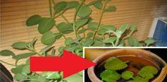 Herbs, Plants, Food, Gardening, Essen, Lawn And Garden, Herb, Meals, Plant