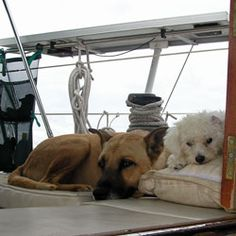 Boat Dogs & Separation Anxiety + Sailing and Living Aboard via the Boat Galley. Great tips. We used to take our dog with us, but our liveaboard neighbors had this problem with their dog.