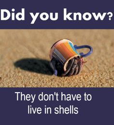 5 things you probably don't know about hermit crabs